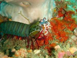tang_lang_shrimp