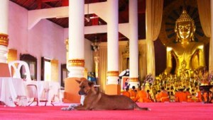 Dog_in_hall