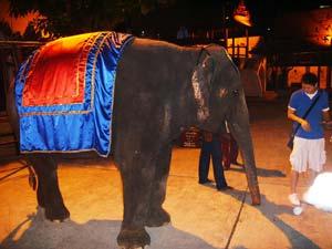 SN_elephant