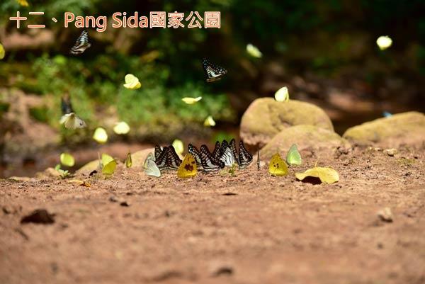 rain12_Pang Sida國家公園