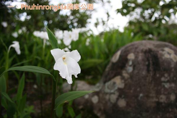 rain1_Phuhinrongkla國家公園