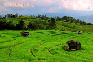 rain6_Pa Bong Piang