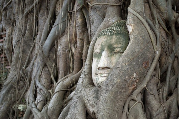 Ayutthaya The Symbol Tourism Bodhi Tree Head Of God